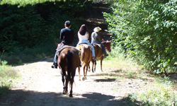 Photo of people horseback riding